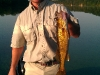 client-wissota-walleye