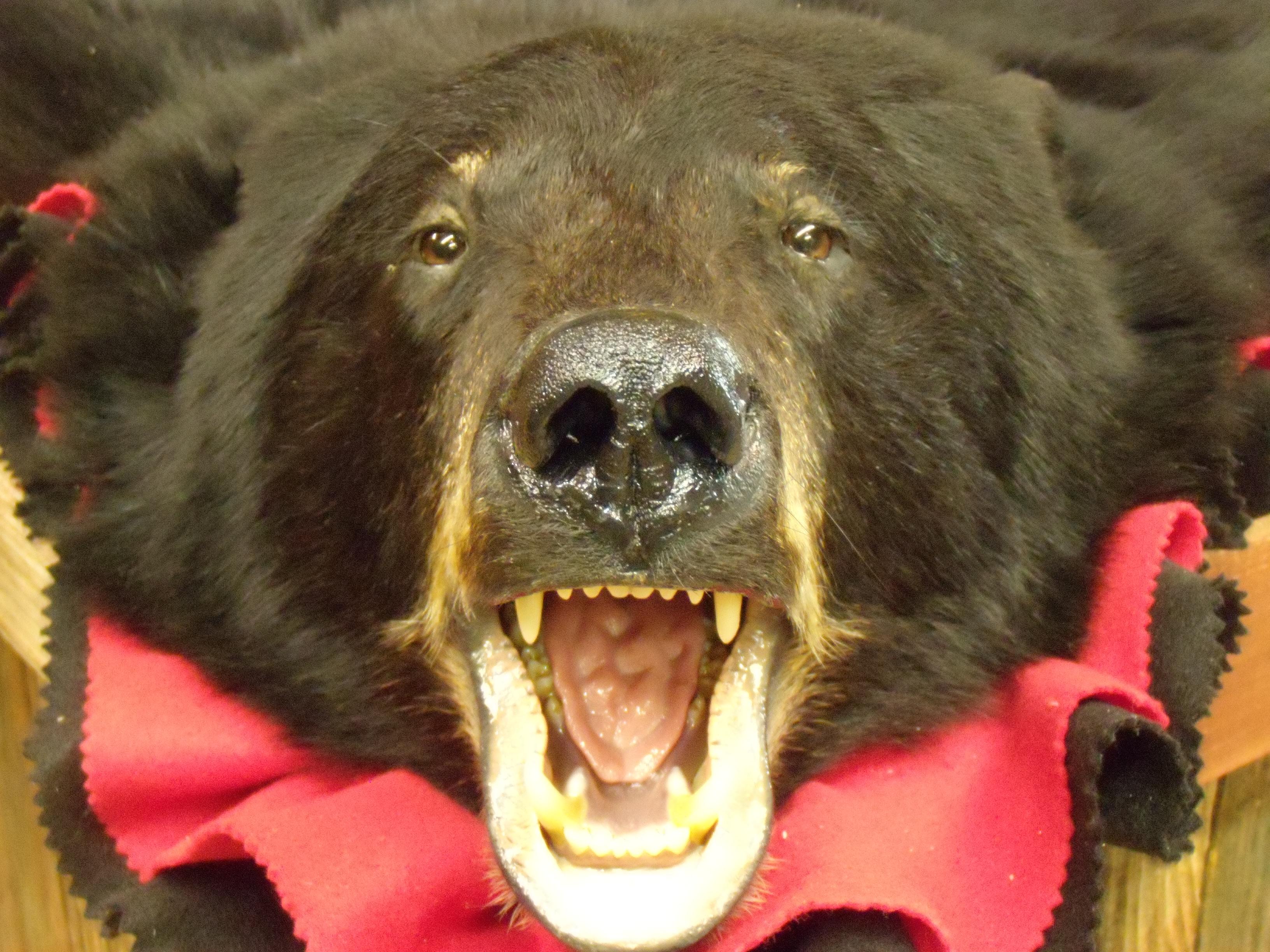 bear-rugs-002