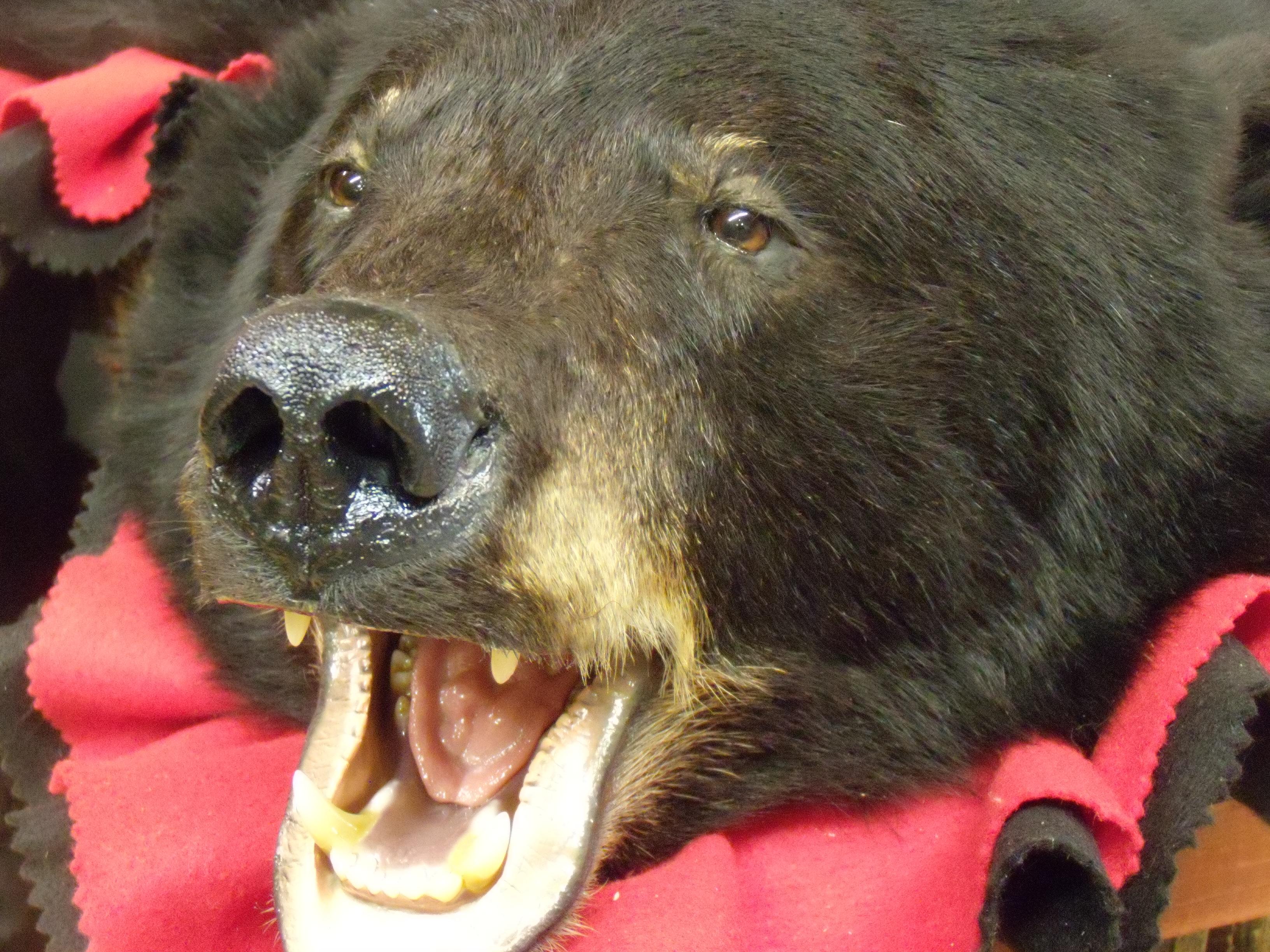 bear-rugs-003_0