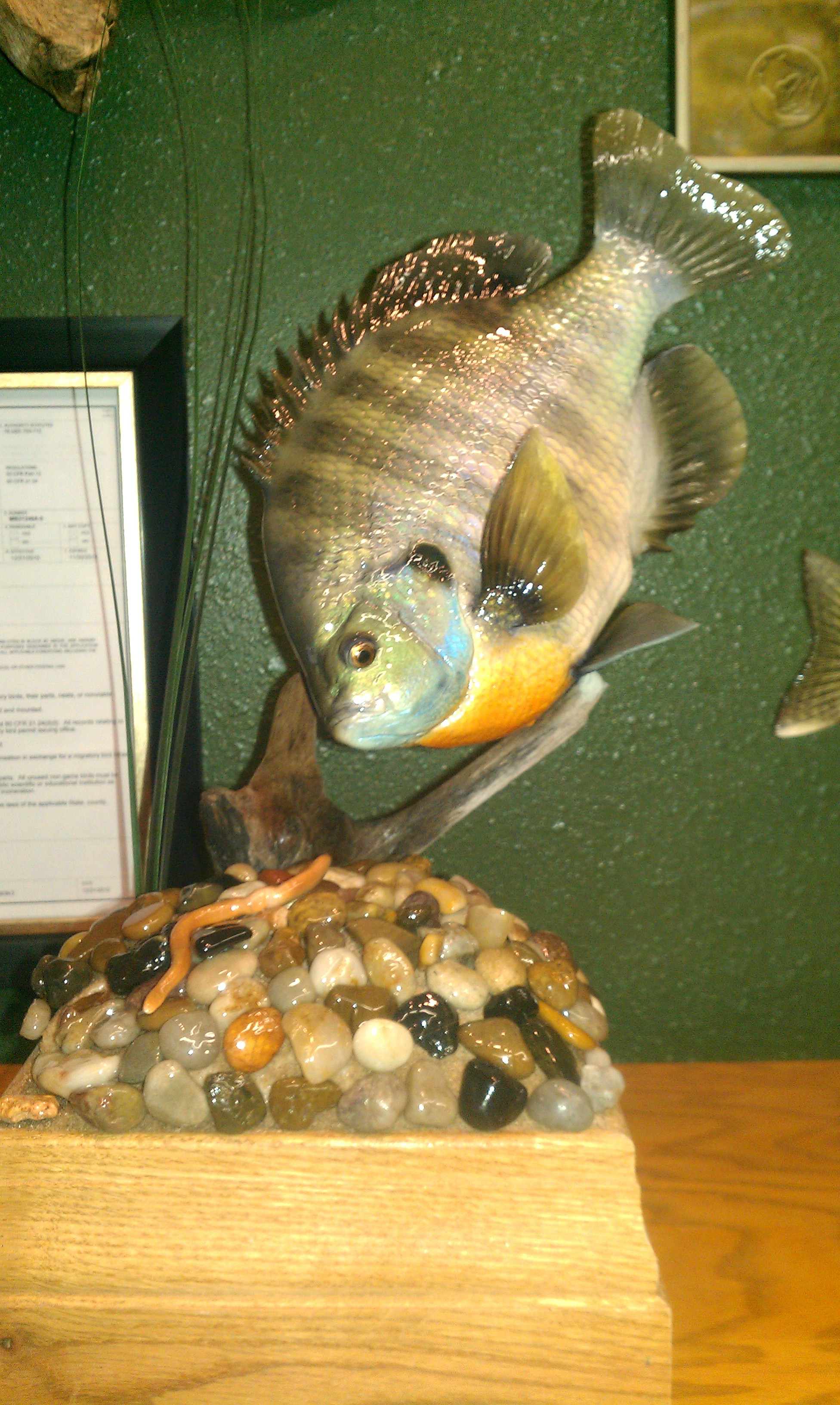 bluegill-replica