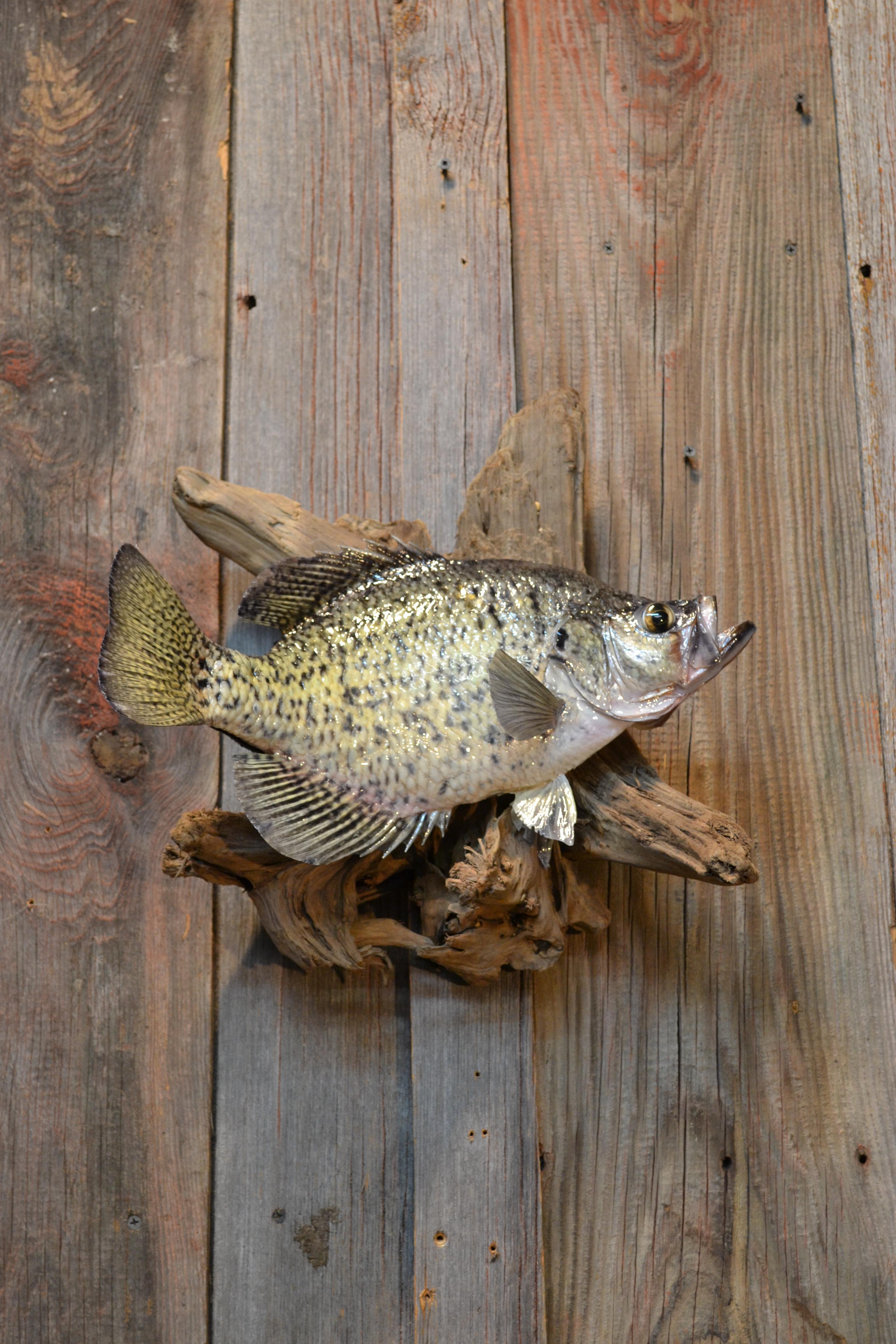 fish 1 27 15 003