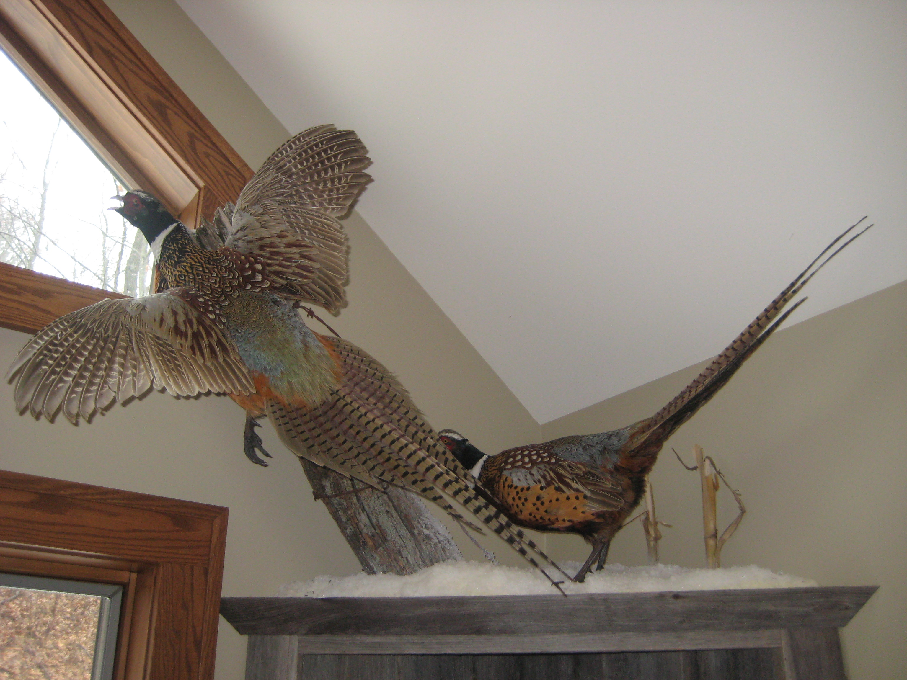 pheasants-on-new-shelf-026
