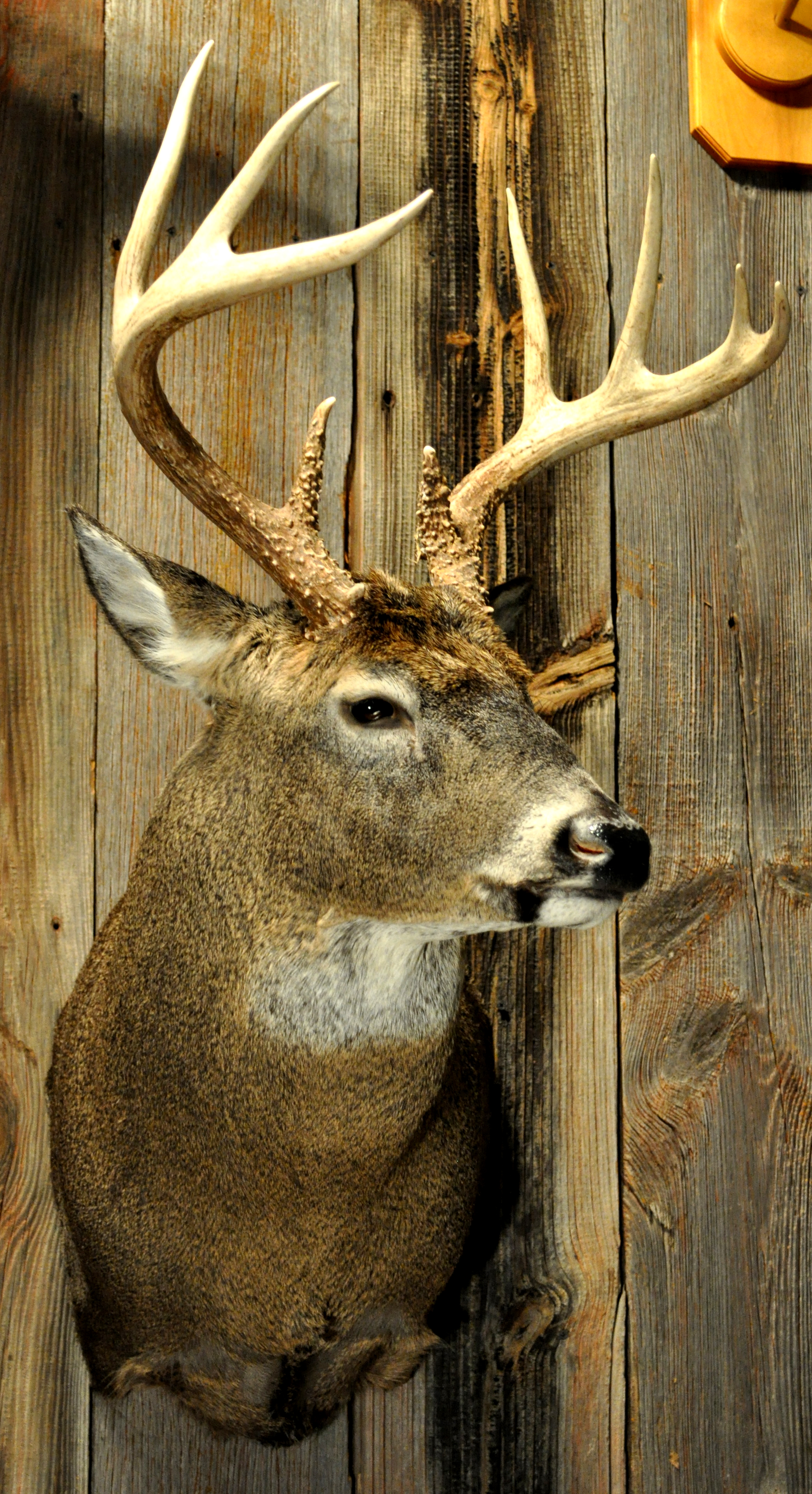 taxidermy-pics2012-013