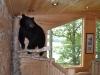 Ron Parks Bear 006