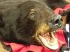 bear-rugs-004