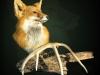 both-fox-copy