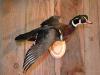 ducks-of-the-week-003