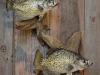 fish 1 27 15 005