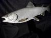 lake-trout-011