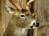 taxidermy-pics2012-013