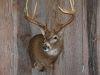 whitetail-taxidermy-pics-and-hollys-bird-002